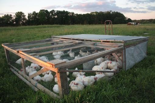 Pastured Meat Chickens Sunbury PA