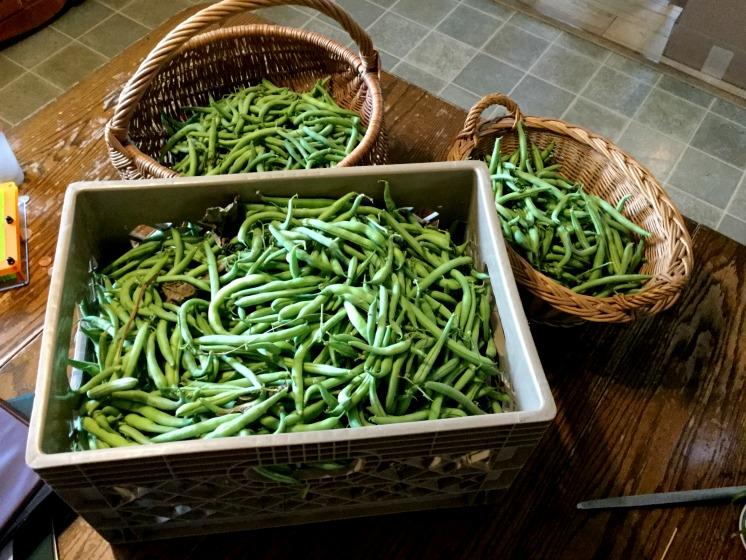 sept-beans