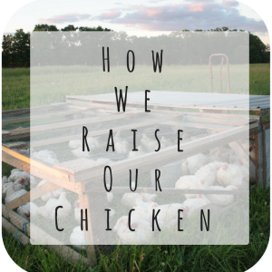 how we raise our chicken (1)